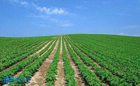 节水灌溉的几种实用技术